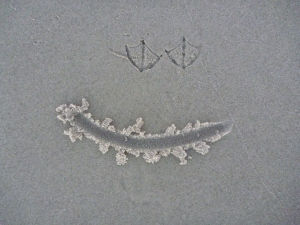 The bird footprints were perfect eyes for a smiley face.